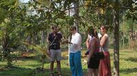 Spice Tour and Home-Cooked Goan Lunch at an Organic Plantation