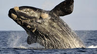 Private Cape Riviera and Whale Watching Tour from Cape Town