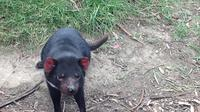 Private South East Food and Scenic Day Trip from Hobart Including the Tasmanian Devil Unzoo image 1