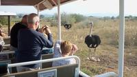 Safari Ostrich Farm Tractor Tour in Oudtshoorn