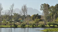Full-Day Photoshoot Experience on the Spier Wine Estate with Wine Tasting