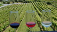 Wine and Food Tour of Matakana from Auckland