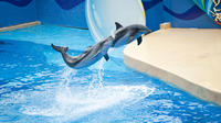 Coach Day Tour - Ocean Park Tour with Hotel Pickup in Kowloon Area From Hong Kong