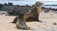 5-Day Galapagos Land Tour: Magic of Isabela Including Santa Cruz