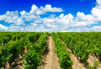 Small-Group Médoc Wine Tour from Bordeaux