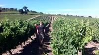 Private Wine Tour of Stellenbosch from Cape Town photo 1