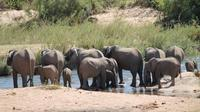 Overnight Kruger Safari from Nelspruit, Whiteriver or Hazyview