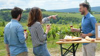 All-Inclusive Chablis and North Burgundy Wine Tour from Paris