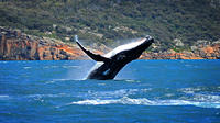 Sydney Harbour Whale Watching Sightseeing Tour via Helicopter and Sailing Yacht image 1