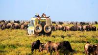 6-Day Tanzania Camping Safari: Lake Manyara, Serengeti, Ngorongoro Cater and Tarangire National Park