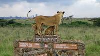 Nairobi National Park Day Excursion