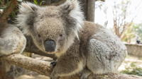 Cleland Wildlife Park Day Trip from Adelaide Including Mount Lofty Summit