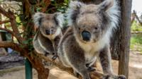 Cleland Wildlife Park Day Trip from Adelaide Including Mount Lofty Summit, Adelaide City Tours and Sightseeing