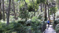 Self-Guided Waterfall Gully to Mount Lofty Hike from Adelaide, Adelaide City Natural Activities & Attractions