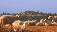 Pienza with Cheese and Wine Tasting Fullday from Rome