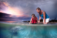 Picture of 2 Day Tangalooma Resort and Dolphin Feeding Tour