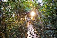 O'Reilly's Lamington National Park and Tree Top Canopy Tour