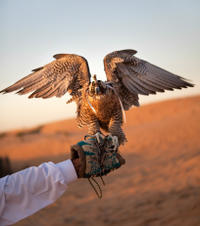 Sheikh Zayed Mosque and Falcon Hospital Tour in Abu Dhabi