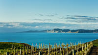 Shore Excursion: Blenheim Wine tour from Picton, Blenheim Tours and Sightseeing
