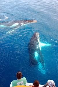 Majestic Whale Watching Adventure from Los Cabos
