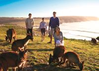 5-Day Adelaide and Kangaroo Island Tour Including Barossa Valley Wine Tasting, Adelaide City Tours and Sightseeing