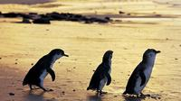 Chadstone Shopping Experience and Phillip Island Penguins Day Trip from Melbourne
