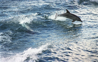 Picture of Jervis Bay Dolphin Cruise and Southern Coast and Highlands Day Tour from Sydney