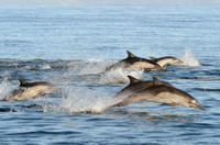 Port Stephens Day Trip with Dolphin Watching, Sandboarding and Australian Wildlife