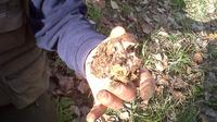 Truffle Hunting in Tuscany: Private Shore Excursion from Livorno Port Private Car Transfers