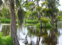 Small-Group Airboat Ride and Plantation Tour from New Orleans