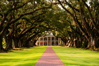 Small Group Tour of Oak Alley and Laura Plantation from New Orleans