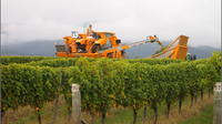 Full-Day Wine Gourmet and Scenic Delight Tour from Picton