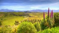 Full-Day Wine Gourmet and Scenic Delight Tour of Marlborough from Blenheim
