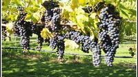 Shore Excursion: Short Tour of Picton and Blenheim Wine Regions