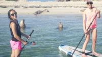 Stand Up Paddleboarding Seal Spotting Adventure from Shoalwater