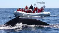 Zodiac Whale Watching Adventure in Los Cabos