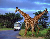 Aquila Game Reserve Wildlife Safari from Cape Town