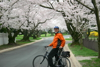 Viator Exclusive: Cherry Blossom Bike Tour in Washington DC Picture