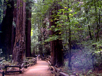 Picture of San Francisco Supersaver: Muir Woods and Wine Country Tour