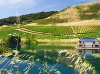Semi Private Small Group Wine Country Tour from San Francisco