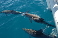 Fraser Island Sailing Adventure Cruise and Dolphin Watching from Hervey Bay