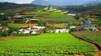 Full-Day Dalat Countryside Tour