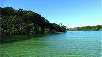 Brunswick Heads Morning Eco Rainforest River Cruise, Brunswick Heads Tours and Sightseeing