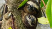 Day Trip from San Jose to Sloths & other wildlife Rescue Center