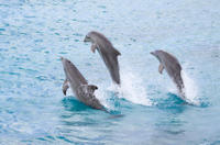 Picture of Half-Day Dolphin Island Tour from Punta Cana