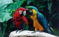 Iguassu Falls Bird Park General Admission Ticket and Tour