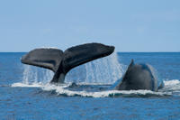 Picture of San Diego Whale Watching Expedition Cruise