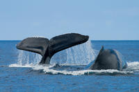 San Diego Winter Whale Watching Expedition Cruise