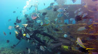 Scuba Dive Package in Bayahibe