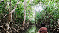 8-Day Exploration of the Amazon Lowlands from Belem